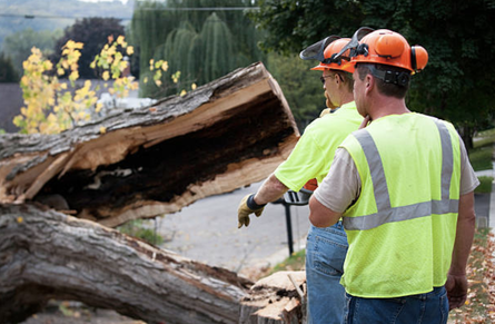 a tree is cut in half after a tree removal process with the stump leftover near Flint, MI