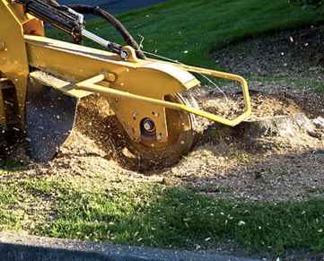 stump grinder is turning a leftover stump into wood chips near Flint, MI